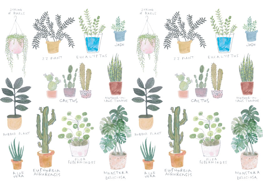 10 Best House Plants: Easy Care Indoor Plants & How to Keep Them Alive