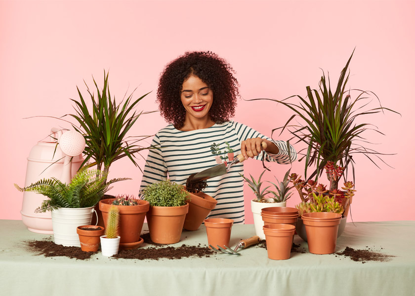 How to Care for Succulents & Cacti